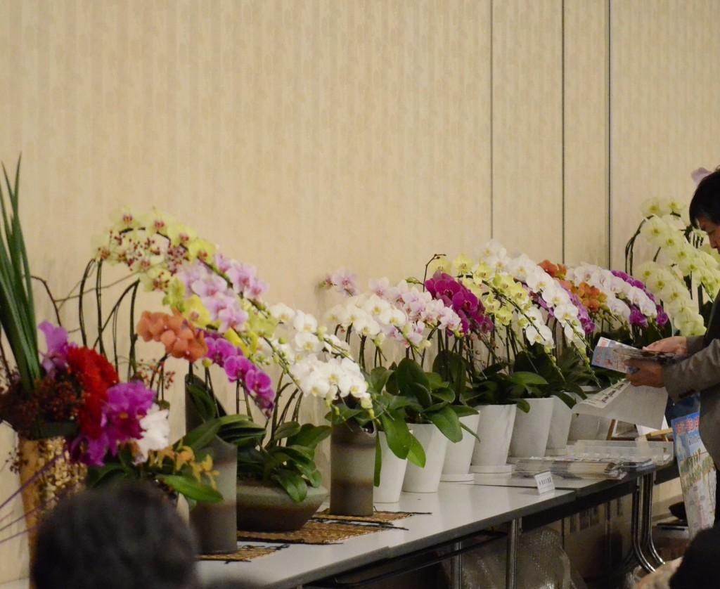 埼玉県洋蘭組合の品評会の模様