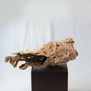 ブドウの根(枯れモノ)