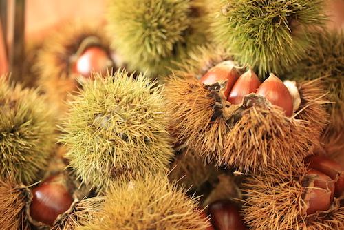 栗chestnut