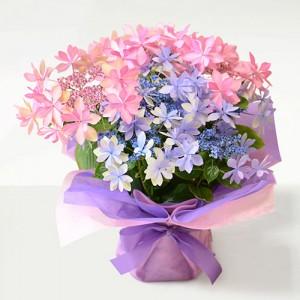 母の日花鉢ハイドランジア<ダンスパーティ>