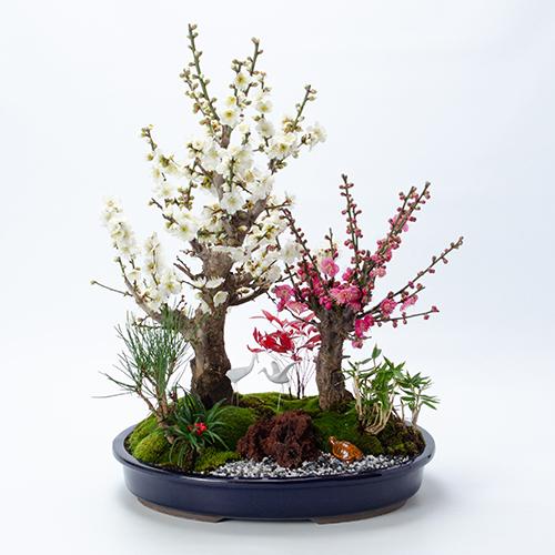 青山花茂本店のお正月飾り紅白梅盆栽