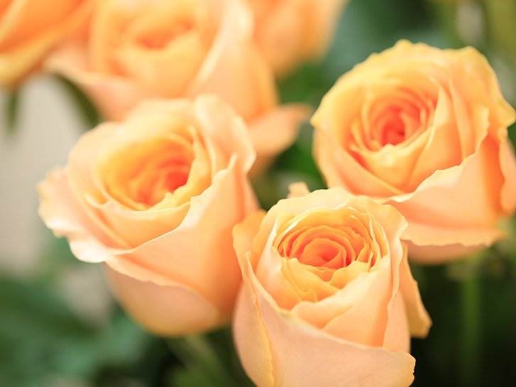 オレンジの大輪バラの画像