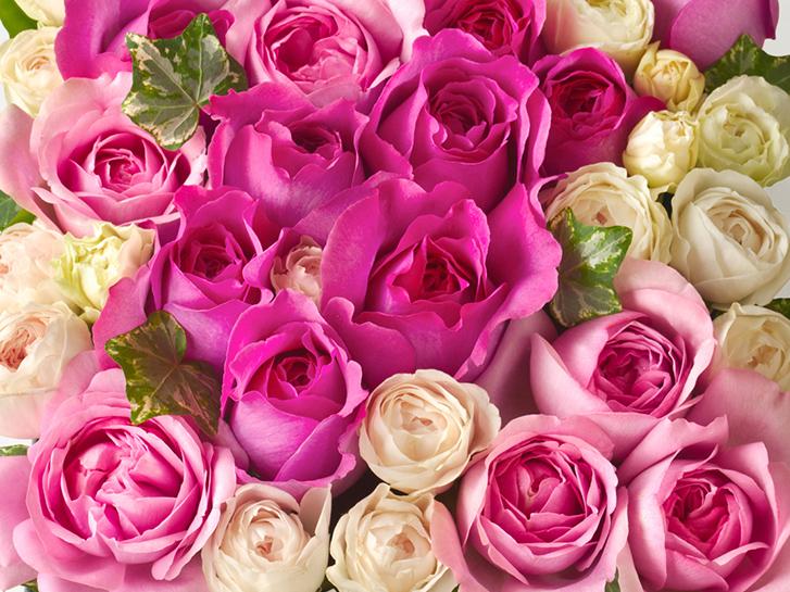 さまざまなバラの品種の画像