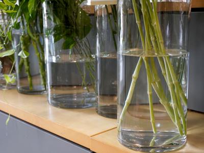 花瓶の水量の画像