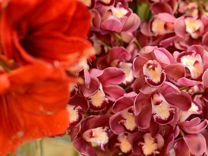 還暦祝いにおすすめの赤い花の画像