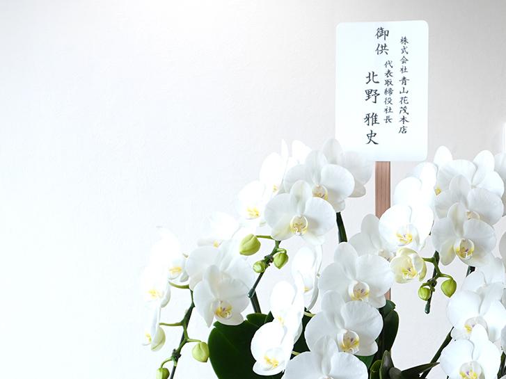 お供え立て札と白い胡蝶蘭の画像