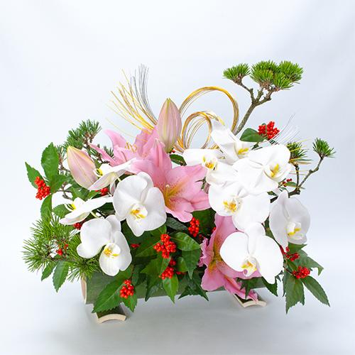 胡蝶蘭のお正月アレンジメントの画像