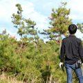 松林の画像