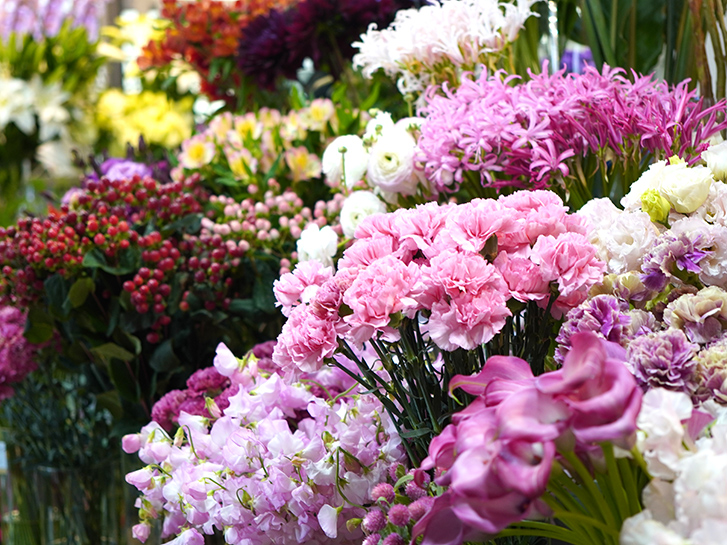 店頭の花の画像