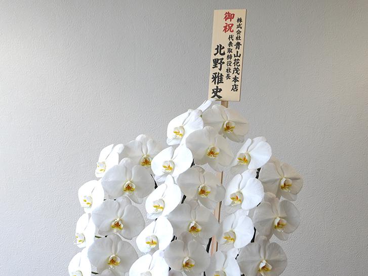 大輪胡蝶蘭とお祝い立て札の画像