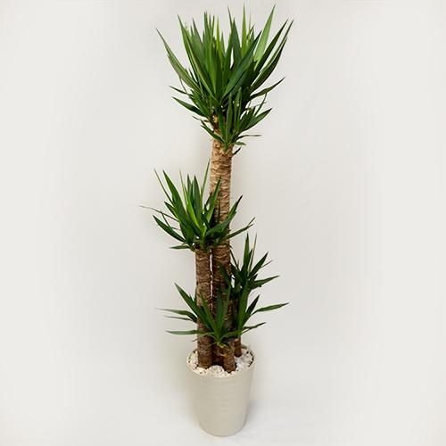 緑の観葉植物の画像