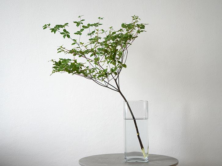 高さ30cmほどの花瓶に活けたドウダンツツジ