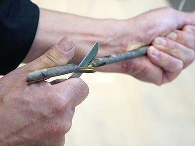 ドウダンツツジの根元の外側を剥ぐ