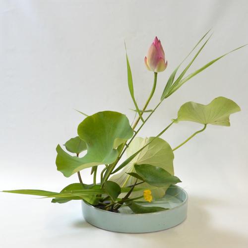 蓮いけばな花材(蓮・河骨・葦)