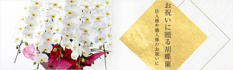 大輪胡蝶蘭の画像